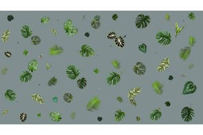 Tropical Leaf Broadloom Carpet by Edward van Vliet for Moooi Carpets