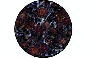 Fool's Paradise Rug by Marcel Wanders for Moooi Carpets