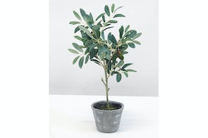 Potted Ficus by Flower Systems